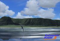 NEWPORT - Kalaupapa Hawaii X