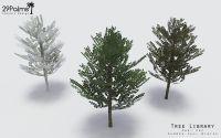 29PALMS - Tree library prima parte